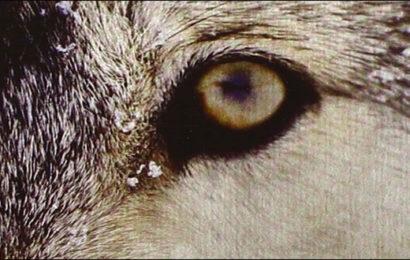 Il lupo e il filosofo – Mark Rowlands